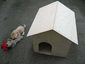 Little Dog's Dog House